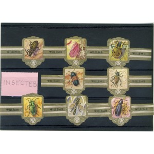 8-bagues-de-cigares-insectes-willem-ii