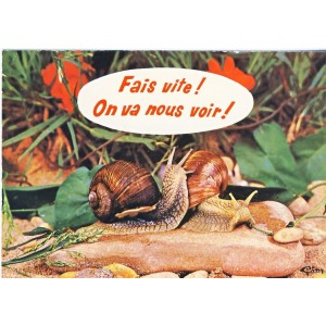 CARTE POSTALE COUPLE D'ESCARGOTS