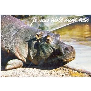 CARTE POSTALE HIPPOPOTAME - JE SUIS TRISTE SANS VOUS