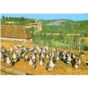 CARTE POSTALE LE LOT REPUTE POUR SES FOIES GRAS