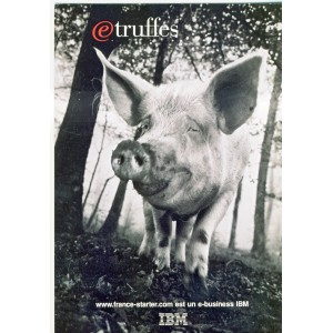 CARTE POSTALE IBM - TRUFFES - COCHON