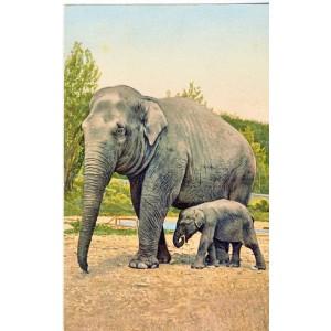 CARTE POSTALE ELEPHANTE ET SON ELEPHANTEAU