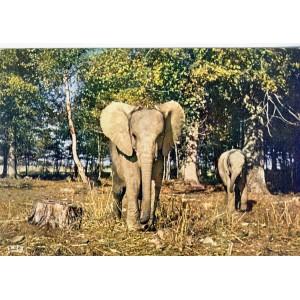 CARTE POSTALE ELEPHANTS DANS LA RESERVE AFRICAINE DE THOIRY EN YVELINES