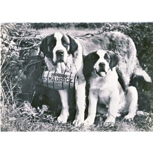 CARTE POSTALE CHIENS SAINT BERNARD - DINA ET BETTY