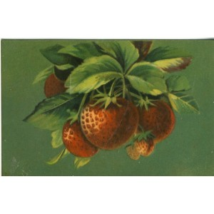 CARTE POSTALE FRUITS - FRAISES