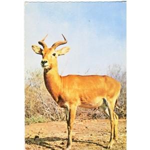 CARTE POSTALE ANTILOPE - FAUNE AFRICAINE