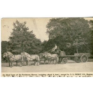 CARTE POSTALE ATTELAGE DE SIX CHEVAUX PERCHERON - S.S. PIERCE CO., BOSTON