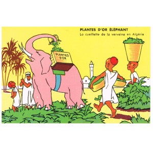 CARTE POSTALE PUBLICITAIRE - PLANTE D'OR ELEPHANT - LA CUEILLETTE DE LA VERVEINE EN ALGERIE