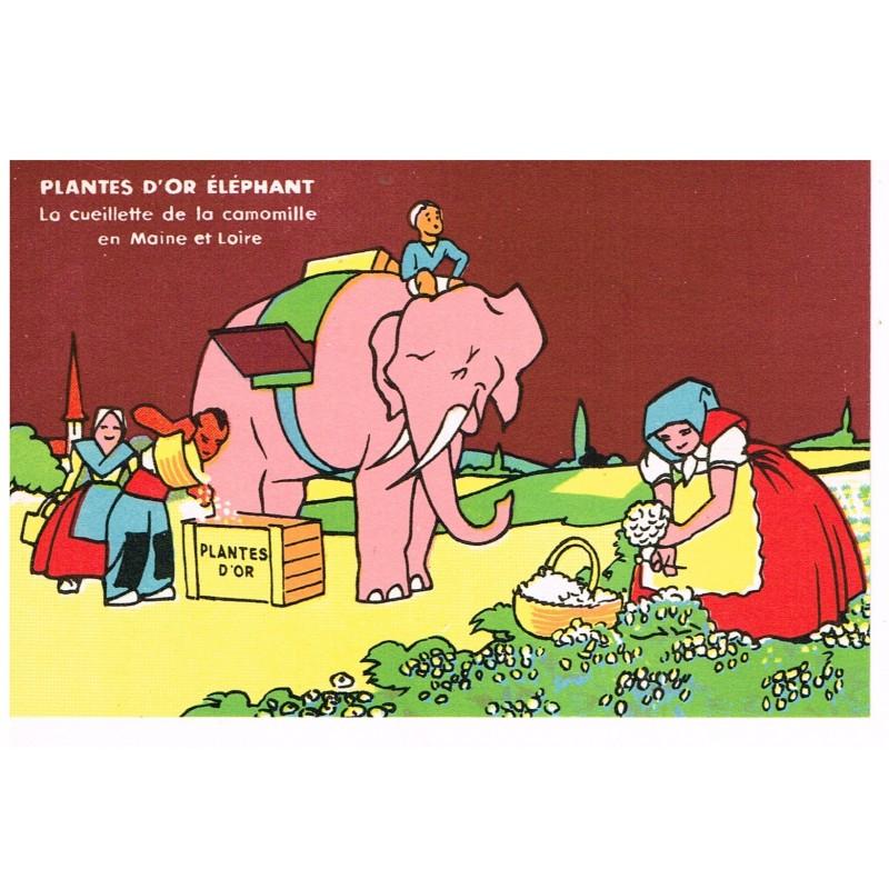CARTE POSTALE PUBLICITAIRE - PLANTES D'OR ELEPHANT - LA CUEILLETTE DE LA CAMOMILLE EN MAINE ET LOIRE