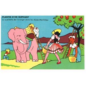 CARTE POSTALE PUBLICITAIRE - PLANTES D'OR ELEPHANT - LA CUEILLETTE DE L'ORANGER DANS LES ALPES-MARITIMES