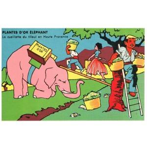 CARTE POSTALE PUBLICITAIRE - PLANTES D'OR ELEPHANT - LA CUEILLETTE DU TILLEUL EN HAUTE PROVENCE