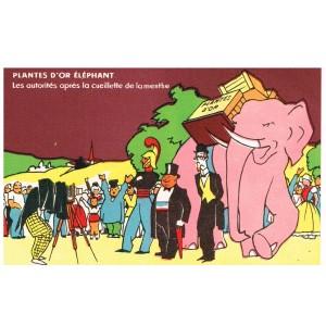 CARTE POSTALE PUBLICITAIRE - PLANTES D'OR ELEPHANT - LES AUTORITES APRES LA CUEILLETTE DE LA MENTHE